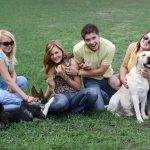 Key Aspects to Focus on When Having Pets at Home